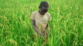 child in tall grass